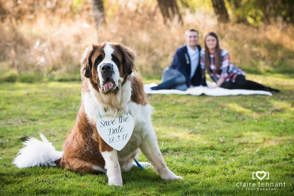 dog pre wedding shoot
