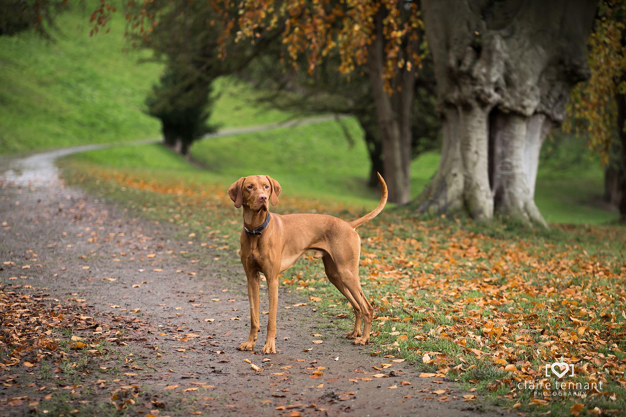 Autumn Dog photography