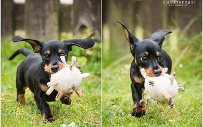 Dog Photography, Livingston – Richmond the Sausage Dog!